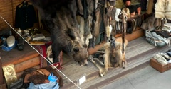 Selling the skins of wild animals, bear, wolves, foxes and other animals Stock Footage