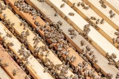 Close up view of the working bees on honeycells. Stock Photos