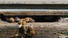 Honeybees work at the entrance to the hive Stock Footage