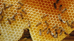 Bees are processed nectar to honey. On honeycombs with honey Stock Footage