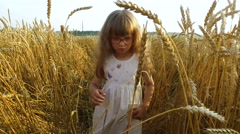 Little girl sneaks through a dense and high wheat. Stock Footage