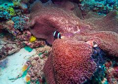 Tropical Fishes near Colorful Coral Reef Stock Photos