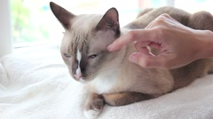 Hand Rub Neck A Cat Stock Footage