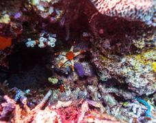 Blue Starfish on Sandy Bottom of Reef Stock Photos