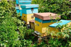 Beehives at a small apiary garden. - stock photo