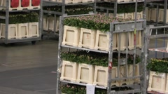 Colorful flowers move slowly at Aalsmeer FloraHolland Flower Auction Market Stock Footage