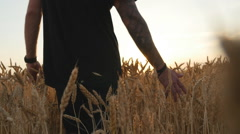 PoleMan walking through wheat field, touching wheat spikes at sunset Stock Footage