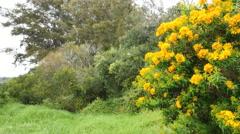 Australia Mornington Peninsula flowering shrubs Stock Footage
