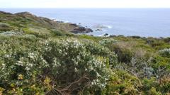 Australia Mornington Peninsula coast with flowers Stock Footage