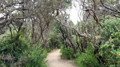 Australia Mornington Peninsula path Stock Footage
