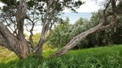Australia Mornington Peninsula coastal tree Stock Footage