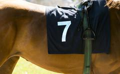 Horse racing, close up on brown horse with number 7 Stock Photos