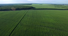 Sown wheat field. Russia Stock Footage