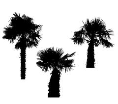 Isolated Silhouette of Palm Trees on White Background. Vector Il - stock illustration