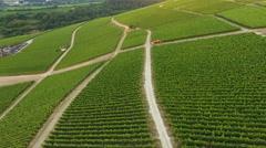 Vineyards - Rheingau-Taununs area, Germany Stock Footage