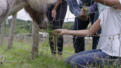 4K Happy families visiting community farm feeding miniature pony through fence Stock Footage