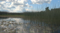 CLOSE UP: Amazing wild aquatic ecosystem life in natural overgrown swamp wetland Stock Footage