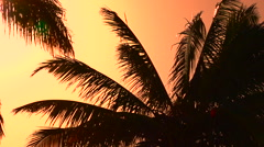 CLOSE UP: Palm tree canopies swinging in summer breeze at amazing golden sunset - stock footage