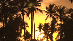 LOW ANGLE VIEW: High coconut palm trees moving in wind at amazing golden sunset Stock Footage