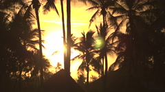 High coconut palm trees moving in wind in amazing forest resort at golden sunset Stock Footage