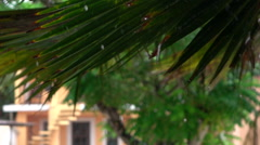 CLOSE UP: Amazing raindrops falling down from big lush green palm tree leaf - stock footage