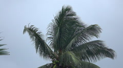 SLOW MOTION: Beautiful lush green palm tree canopy on fresh stormy summer day - stock footage
