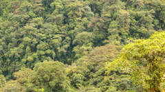 View of mountain slopes clothed in primary montane rainforest Stock Footage