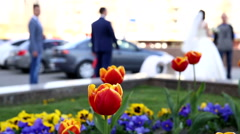 Beautiful tulips in a flowerbed Stock Footage