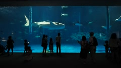 People watching at a whale shark in an Aquarium - stock footage