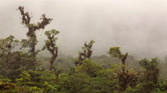 Time-lapse of clouds moving over montane rainforest Stock Footage