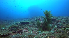 Coral reef with unidentified black coral, soft coral, hydrozoan... Stock Footage