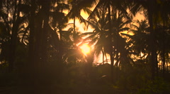 CLOSE UP: High coconut palm trees in stunning forest resort at golden sunset - stock footage