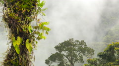 Time-lapse of mist blowing over rainforest covered mountain slopes  Stock Footage