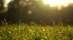 Girl going away barefoot on summer sunset lawn, 4K zoom in shot Stock Footage