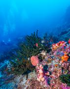 Fishes and Sea Bottom of Ecosystem Stock Photos