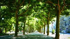 Tree Lane old Town Wiesbaden Hessen Germany Europe Stock Footage