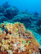Colorful Tropical Reef Landscape Stock Photos