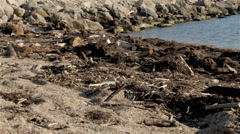 Dump Garbage On The Beach Near The Sea, Environmental Pollution Stock Footage
