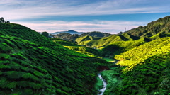 Dawn over the tea plantations in Cameron Highlands, Malaysia Stock Footage