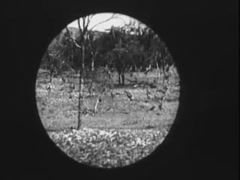 Point of view from spy scope of gazelles leaping through forest in slow motion, Stock Footage