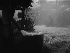 Wide shot of men in slickers trudging through mud in tropical rain storm, 1930s Stock Footage