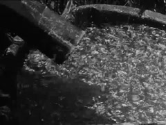 Water running from drain pipe into barrel in jungle during storm,  1930s Stock Footage
