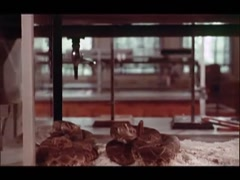 Tracking shot of snakes in terrarium in research lab, 1970s Stock Footage