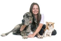 Great Dane, chihuahua and teenager Stock Photos