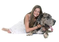 Great Dane and child Stock Photos