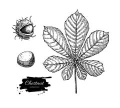 Vector chestnut leaf and nuts drawing set. Autumn elements. Stock Illustration