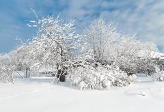 The snowy trees in January Stock Photos