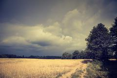 Dark Toned Landscape with Field and Moody Sky - stock photo