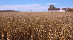Fields of corn wave in the breeze on a sunny Wisconsin farm day. Stock Footage