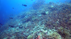 Hard and soft coral reef full of colorful anthias and other tropical fishes Stock Footage